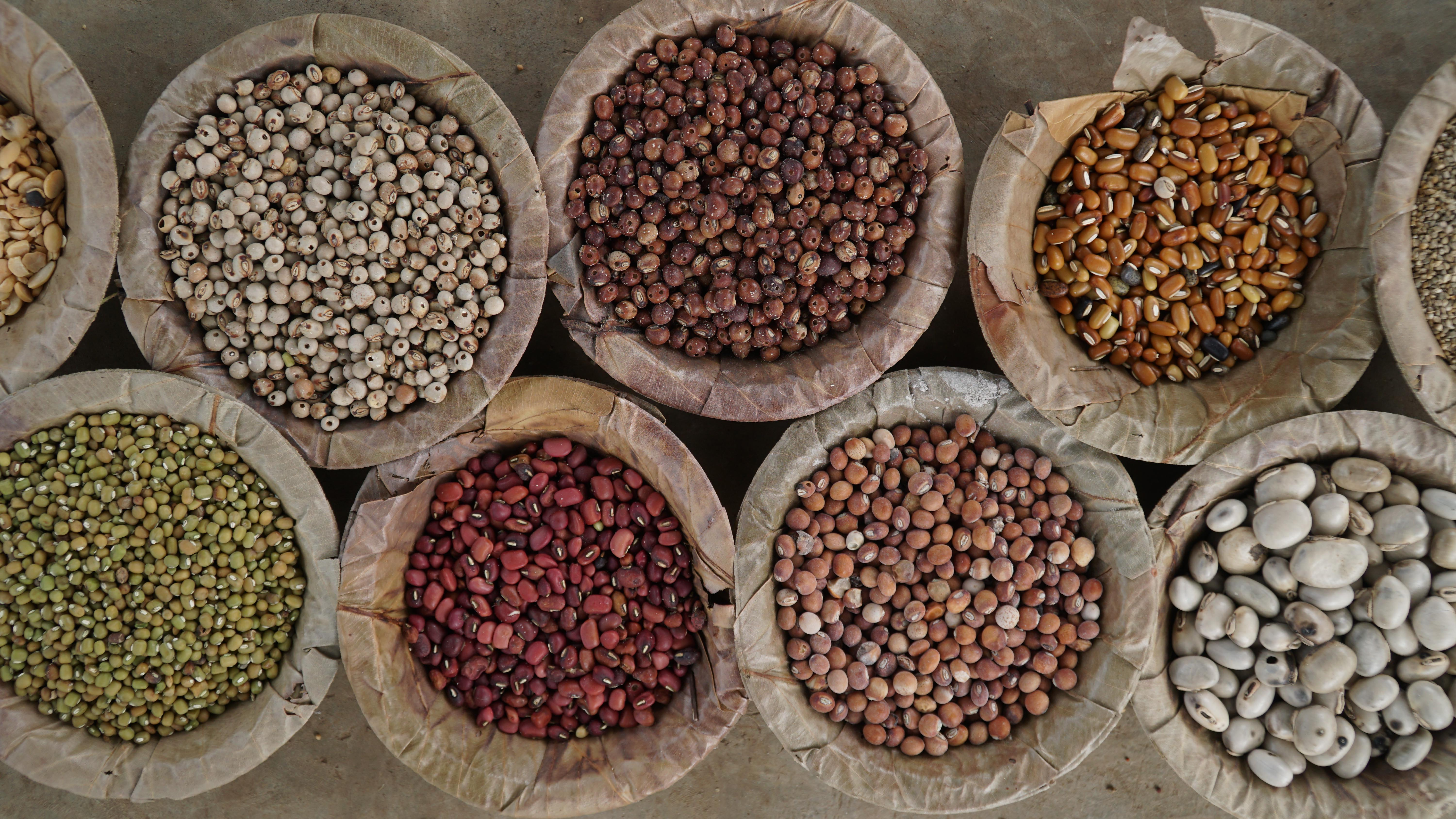 NEW LAWS, OLD WAYS: A view on India's Seeds Bill from a Tribal Perspective
